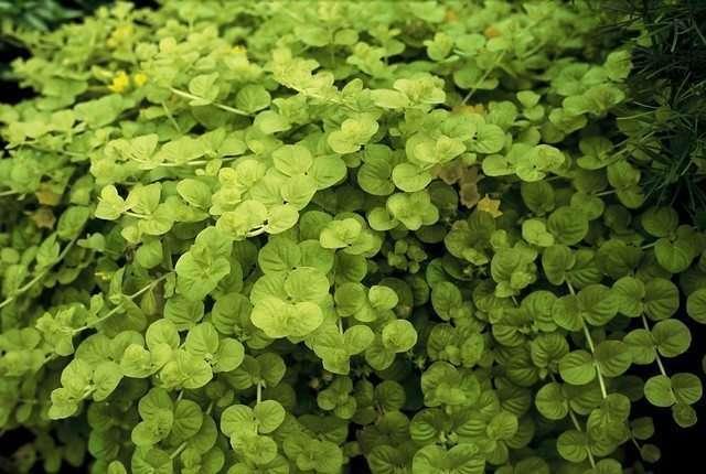 Grün macht glücklich image