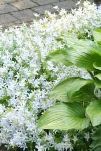 Pflanzen für pralle Sonne