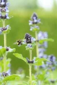 Schmetterlings- und bienenfreundliche Pflanzen