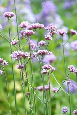 Kwitnące rośliny ogrodowe