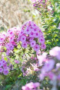Blühenden Gartenpflanzen