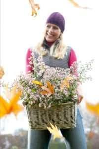 Herbstastern: Aster ericoides 'Snowflurry' und Aster lateriflorus 'Horizontalis'