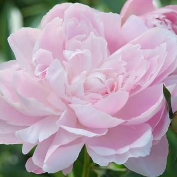 Die Top 10 der Pflückblumen image