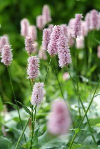 Die Top 10 der Pflückblumen