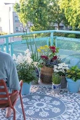 Balkonpflanzen sind echtes Glück