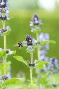 Verwandeln Sie Ihren Garten mit Stauden in eine Bienenwiese