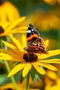 Stauden sind gut für die Artenvielfalt: Schmetterlinge, Bienen und Vögel sind willkommen!