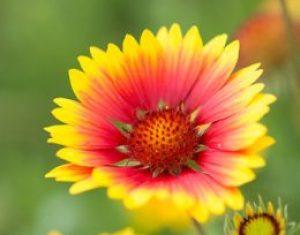 Zierpflanzen: schön und noch mehr