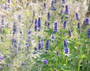 Neuer Gartentrend: Webpflanzen